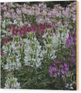 Colors Of Summer Wood Print