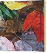 Colors Of The Fall Wood Print