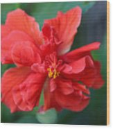 Colors Of The Tropics Hibiscus Wood Print