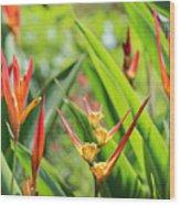 Colors Of The Tropics Wood Print