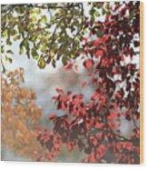 Colour Wood Print