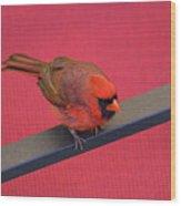 Colour Me Red - Northern Cardinal - Cardinalis Cardinalis Wood Print