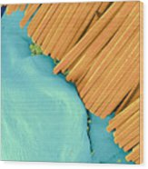 Coloured Sem Of A Toothbrush Scrubbing A Tooth Wood Print by Volker Steger