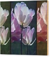 Coloured Tulips Wood Print