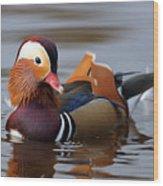 Colourful Duck Wood Print