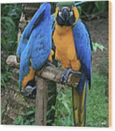 Colourful Macaw Pohakumoa Maui Hawaii Wood Print