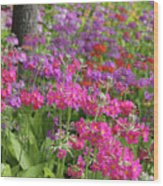 Colourful Primula Candelabra At Wisley Gardens Surrey Wood Print