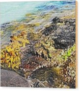 Colourful Sea Life - Fishers Point Wood Print