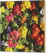 Colourful Spring Flowers Wood Print