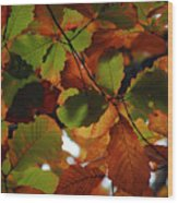 Colours Of Fall II Wood Print