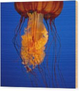 Colours Of The Jelly Fish Wood Print by Naman Imagery
