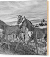 Colt 019 Wood Print