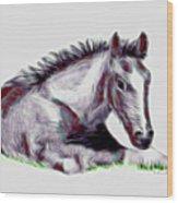 Colt Wood Print