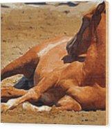 Colt Lying Down Wood Print
