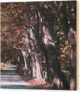 Colt State Park Bristol Rhode Island Wood Print