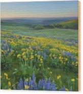 Columbia Hills Wildflower Dawn Wood Print