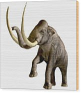 Columbian Mammoth Wood Print