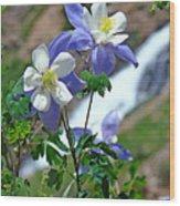 Columbine 3 Wood Print by Diana Douglass