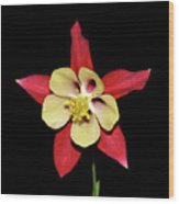 Columbine - Aquilegia - Mckana's Giant 002 Wood Print