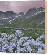 Columbine At America Basin Wood Print
