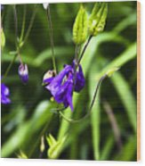 Columbine Flower 2 Wood Print