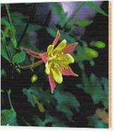 Columbine Outstanding Red Yellow  Wood Print