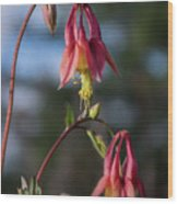 Columbine Sentinals Wood Print