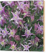 Columbine Splendor Wood Print