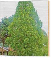 Columnar Oak Along White Pine Trail In Kent County, Michigan  Wood Print