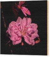 Columnar Ornamental Peach 001 Wood Print