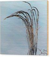 Combie Lake Reeds Wood Print