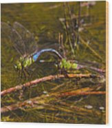 Come Along With Me Dragonflies Wood Print