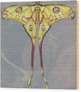 Comet Moth Wood Print