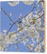 Coming Of Spring Wood Print