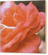 Coming Up Roses Wood Print