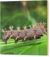Comma Caterpillar Wood Print