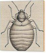Common Bedbug, Cimex Lectularius Wood Print