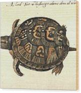 Common Box Tortoise, 1585 Wood Print