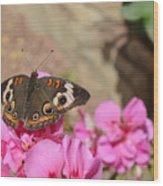 Common Buckeye Butterfly Wood Print