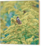 Common Buckeye Butterfly Hides In The Goldenrod Wood Print