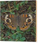 Common Buckeye Wood Print