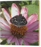 Common Checker Butterfly Wood Print