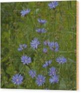 Common Chicory Wildflowers #1 Wood Print