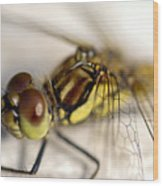 Common Darter  Dragonfly Compound Eye And Synthorax Wood Print
