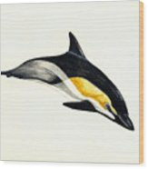 Common Dolphin Wood Print