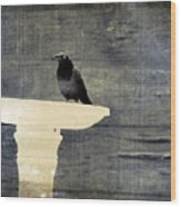Common Grackle Wood Print