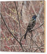 Common Grackle In Spring Wood Print