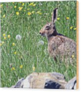 Common Hare Wood Print