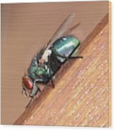 Common House Fly Wood Print