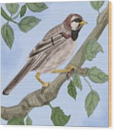 Common House Sparrow Wood Print